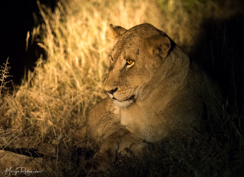 Captured at Kruger National Park on 08 Jun, 2018 by Marije Rademaker
