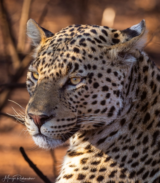 Captured at Kgalagadi Transfrontier Park on 02 Oct, 2018 by Marije Rademaker