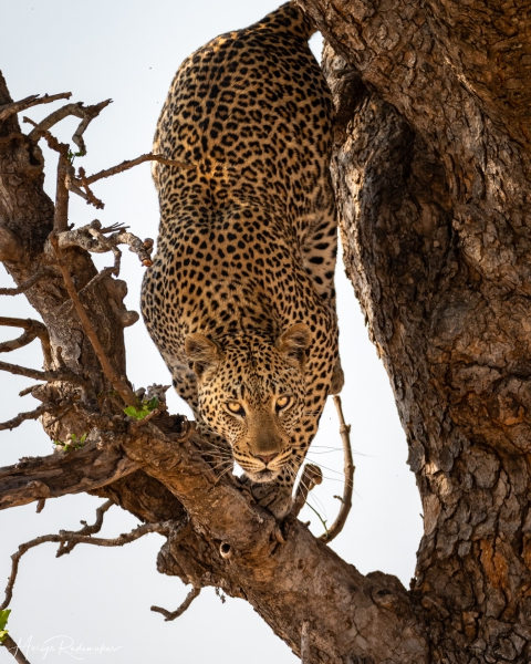 Captured at Kruger NP on 05 Oct, 2019 by Marije Rademaker