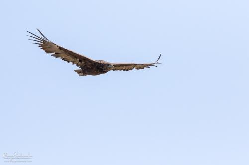 birds__29A8276