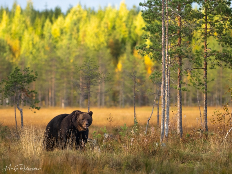 Captured at Wildlife Finland on 17 Sep, 2019 by Marije Rademaker