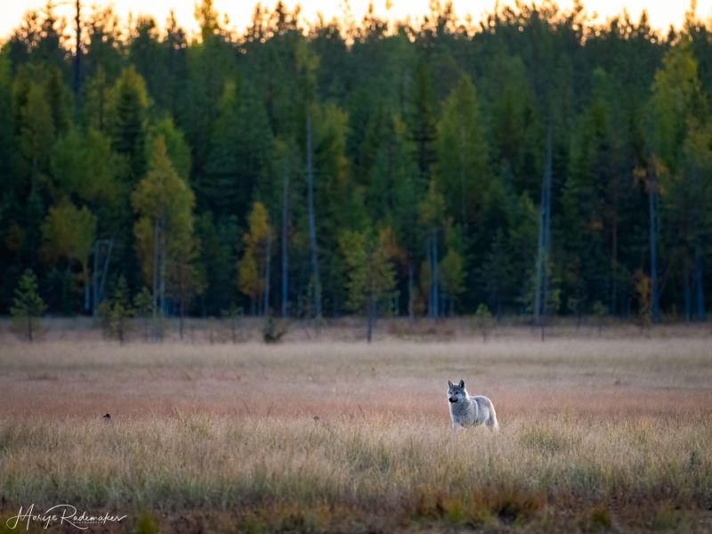 Captured at Wildlife Finland on 18 Sep, 2019 by Marije Rademaker