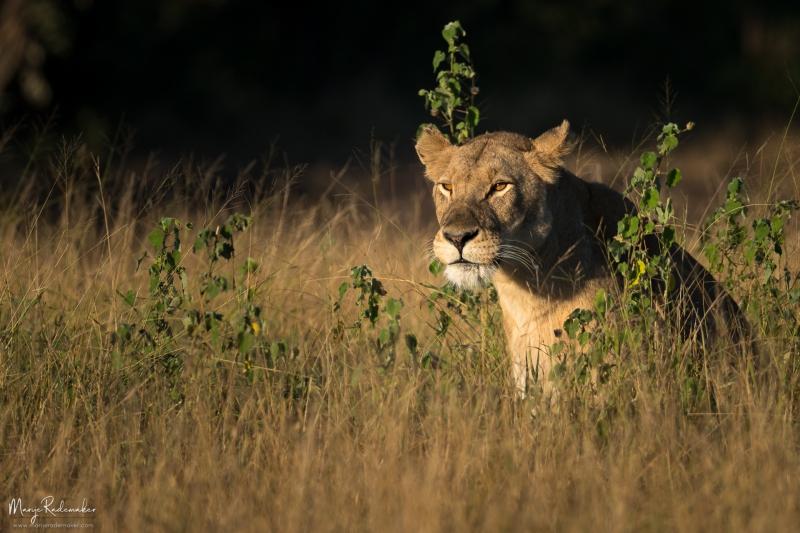 Captured at Kruger National Park on 07 Jun, 2018 by Marije Rademaker