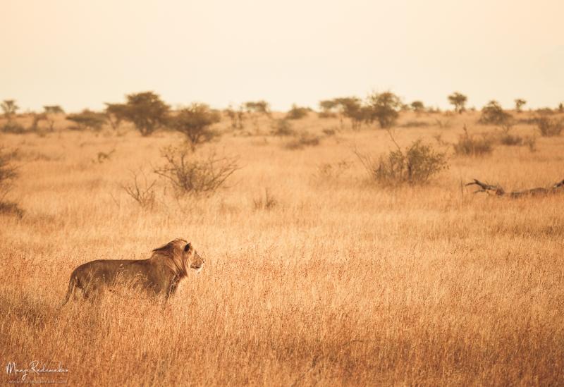 Captured at Kruger National Park on 08 Jun, 2018 by Marije Rademaker