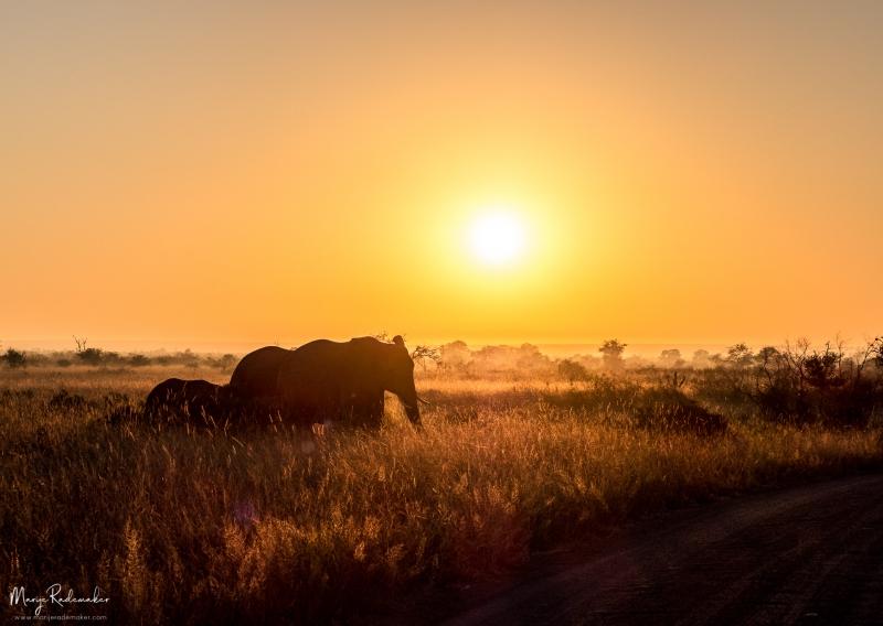 Captured at Kruger National Park on 09 Jun, 2018 by Marije Rademaker