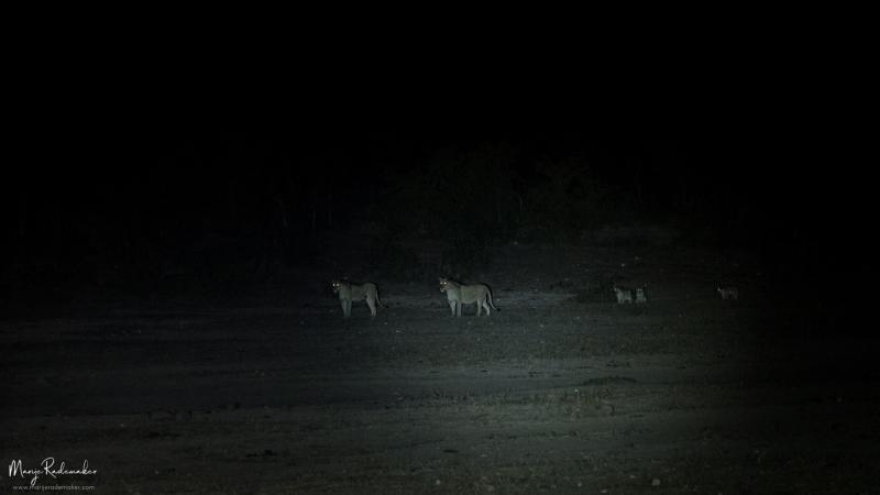 Captured at Kruger National Park on 10 Jun, 2018 by Marije Rademaker