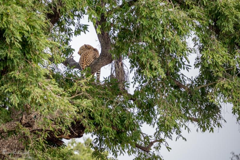 Captured at Kruger National Park on 11 Jun, 2018 by Marije Rademaker