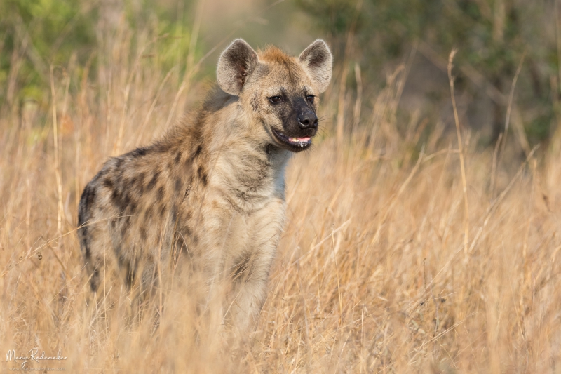 Captured at Kruger National Park on 12 Jun, 2018 by Marije Rademaker