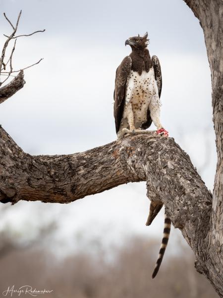 Captured at Kruger NP on 02 Oct, 2019 by Marije Rademaker