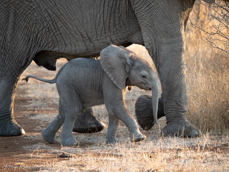 Captured at Kruger NP on 03 Oct, 2019 by Marije Rademaker