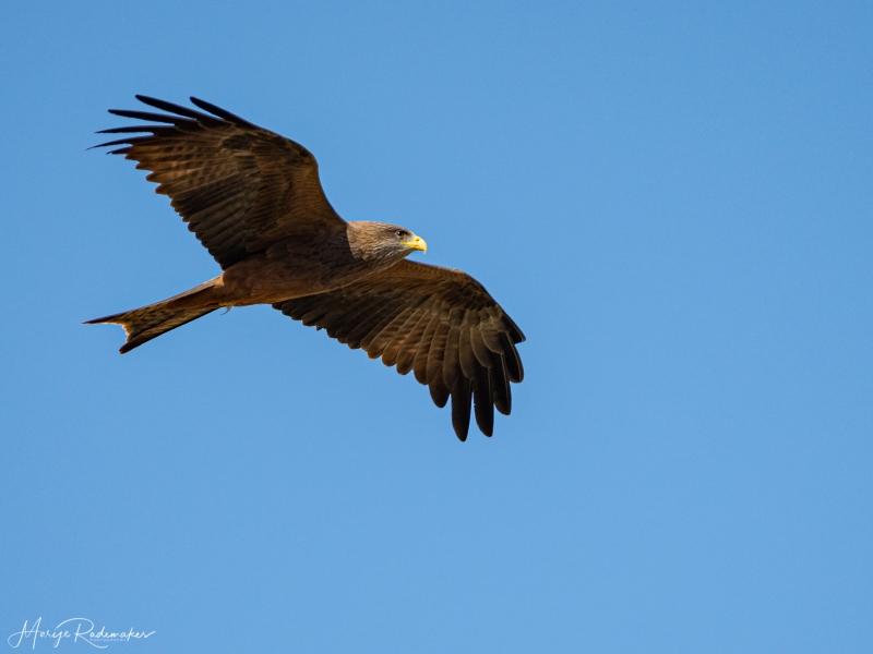 Captured at Kruger NP on 04 Oct, 2019 by Marije Rademaker