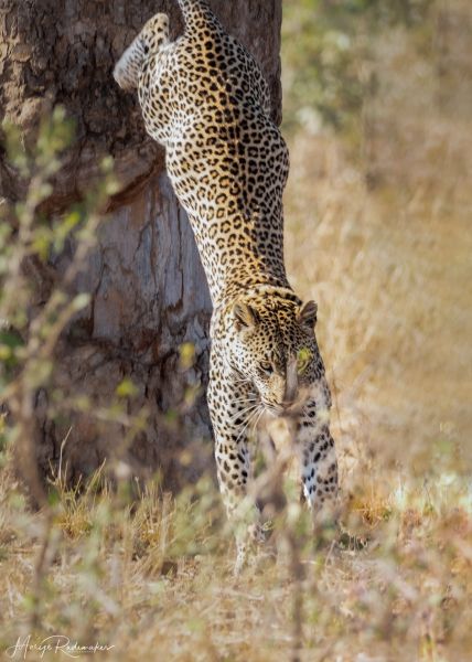 Captured at Kruger NP on 05 Oct, 2019 by Marije Rademaker