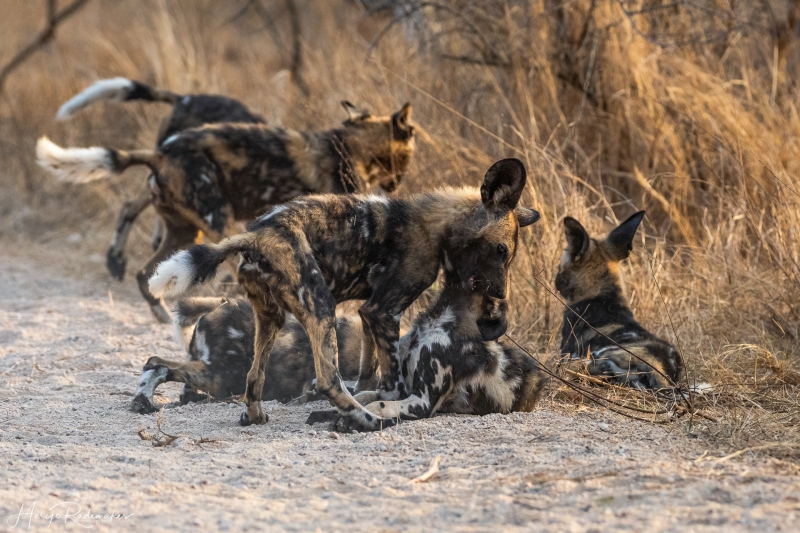 Captured at Kruger NP on 07 Oct, 2019 by Marije Rademaker