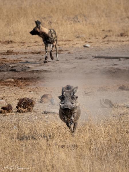 Captured at Kruger NP on 08 Oct, 2019 by Marije Rademaker