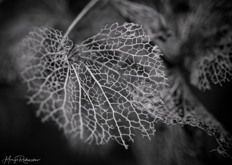 © Marije Rademaker