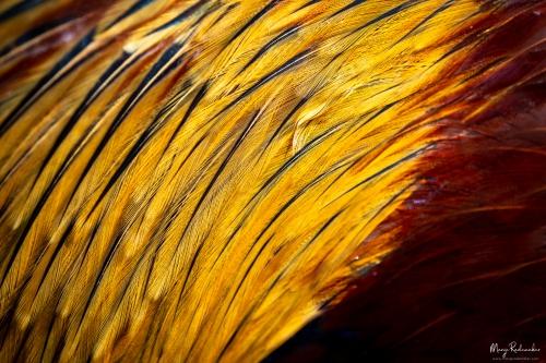 birds_P4061466