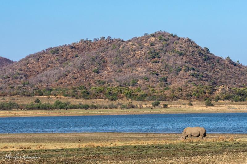 Captured at Pilanesberg on 01 Oct, 2018 by Marije Rademaker