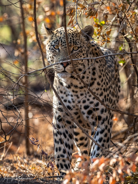 Captured at Pilanesberg on 02 Oct, 2018 by Marije Rademaker