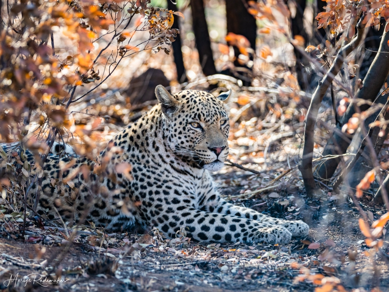 Captured at Kgalagadi Transfrontier Park on 02 Oct, 2018 by Marije Rademaker